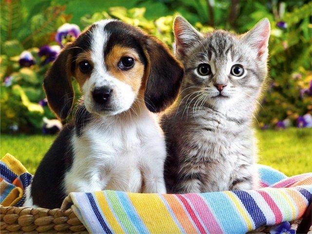 В Хмельницькому проводиться реєстрація котів та собак Фото biology.kiev.ua