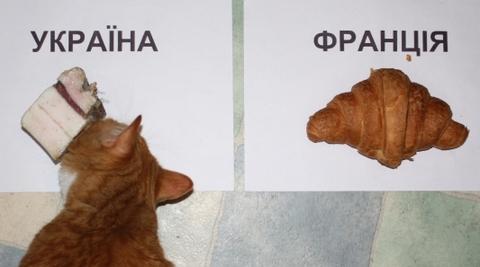 Рудий кіт, який передбачив перемогу збірної України