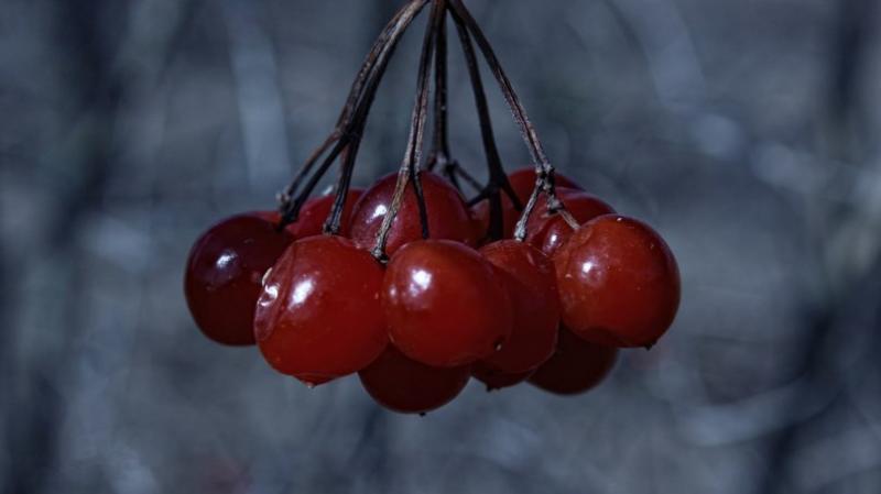 На Хмельниччині введено податок на лісові ягоди