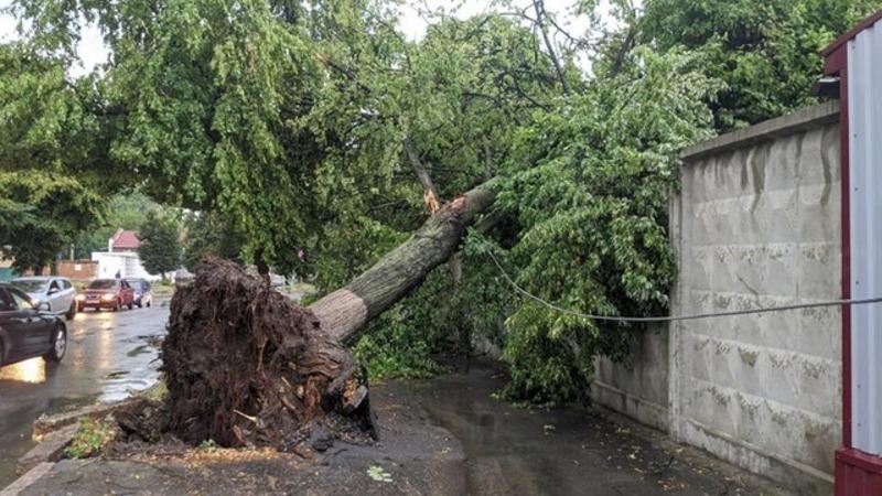 Цього дня минулого року злива та вітер на Хмельниччині повалили дерева та зірвали дах будинку