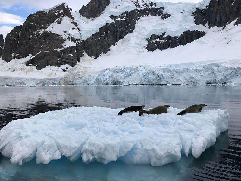21 квітня 2020 року учасники 25-ї Української антарктичної експедиції подолали останній відрізок шляху до Антарктиди та дісталися станції «Академік Вернадський»