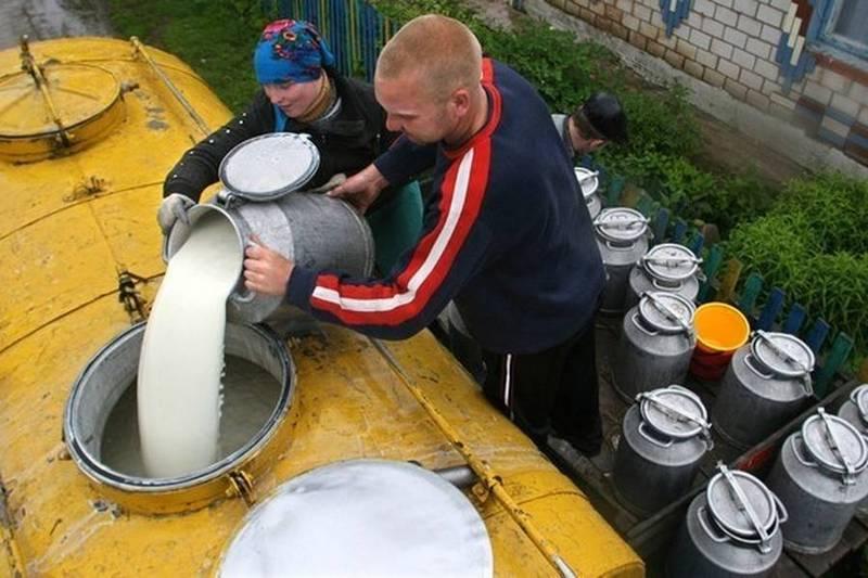 Заготовляючи молоко підприємства одночасно знизили ціни