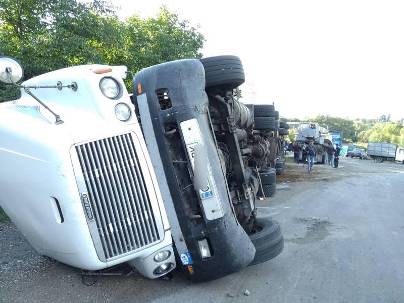 З 70 корів, що перевозив автомобіль, 11 загинуло
