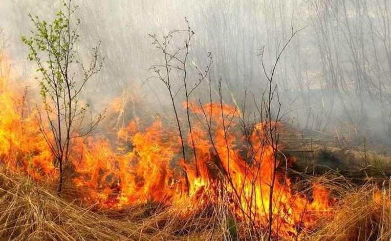 Рятувальники гасили пожежу сухої трави