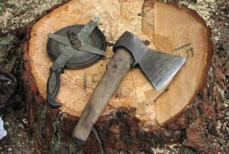 Через службову недбалість комунальників знищили дерева