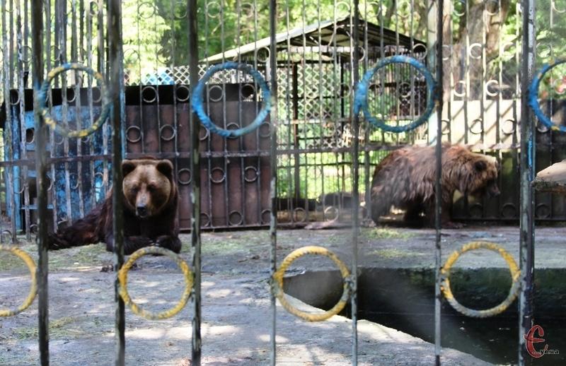 Аліса і Тімка вже багато років живуть у парку Чекмана. Фото: автора