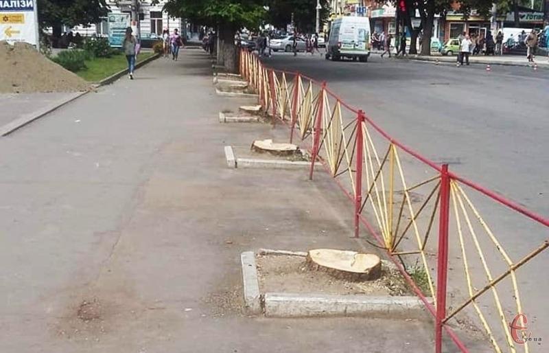 В управлінні ЖКГ кажуть, що дерева були трухлявими