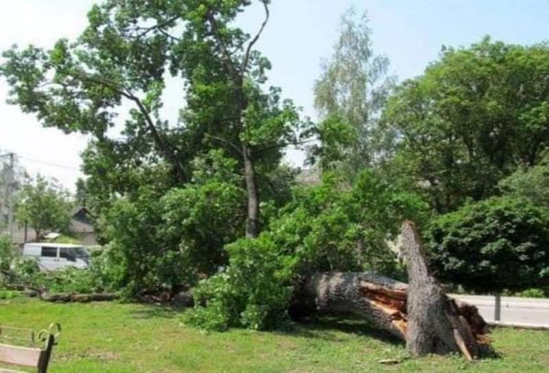 У 2012 році 4 червня у Городку впав 400-літній дуб