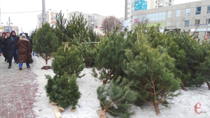 Новорічні дерева продаватимуть на декількох локаціях