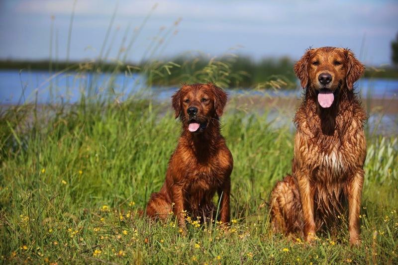 Виставка собак відбудеться 4 травня у Городку