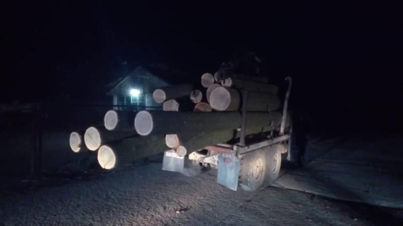 На Ізяславщині незаконно продавали ліс