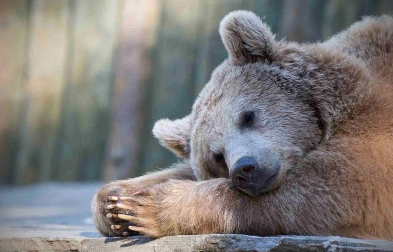 Найбільший в Україні реабілітаційний центр для диких тварин розпочне уже восени