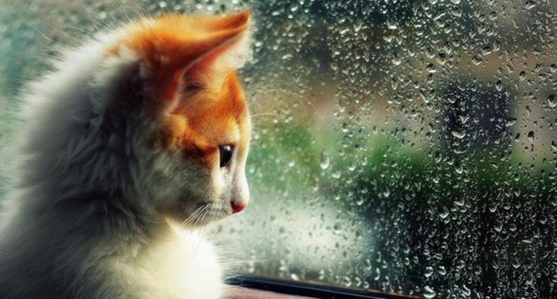 Сьогодні весь день дощитиме