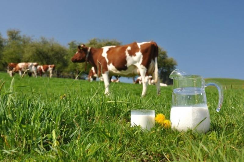 Якби не допомога рятувальників та працівників РЕМу, мешканка Теофіполя могла б залишитися без корови