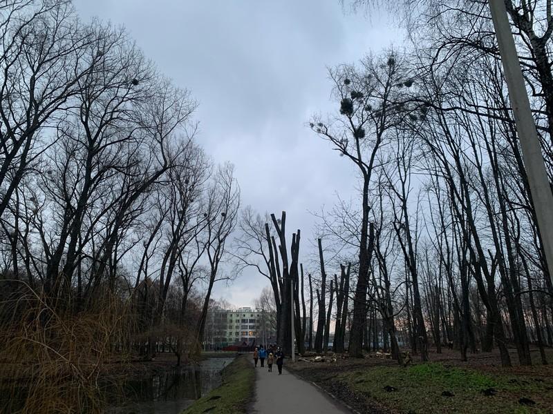 Екоінспектори вважають, що обрізка дерев у парку Чекмана завдала довкіллю понада 182 тисяч гривень
