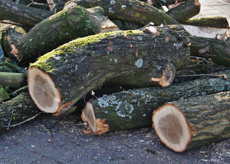 Інспектори виявили пошкодження дерев різних порід, які не мали б підпадати під рубку