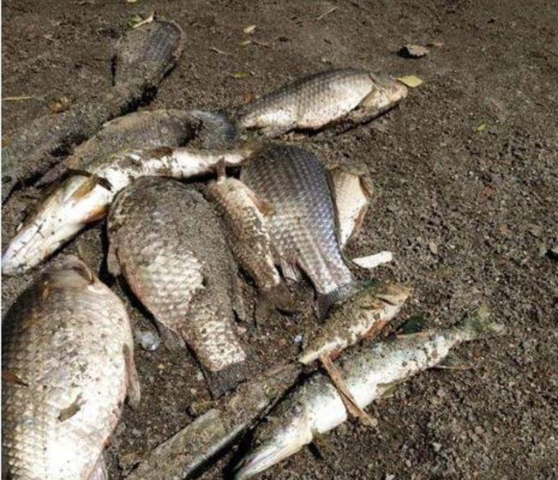 Через загибель риби екологи перевіряють Плоску