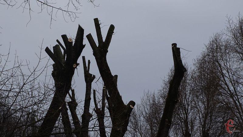 За інформацією екоінспекції, лісівникам нарахували шкоди понад 11 тисяч гривень