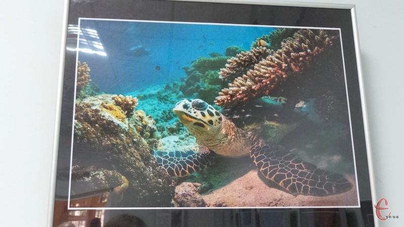 Микола Заварика: довелося взяти в руки камеру та полізти з нею під воду, щоб показати людям всю красу океану