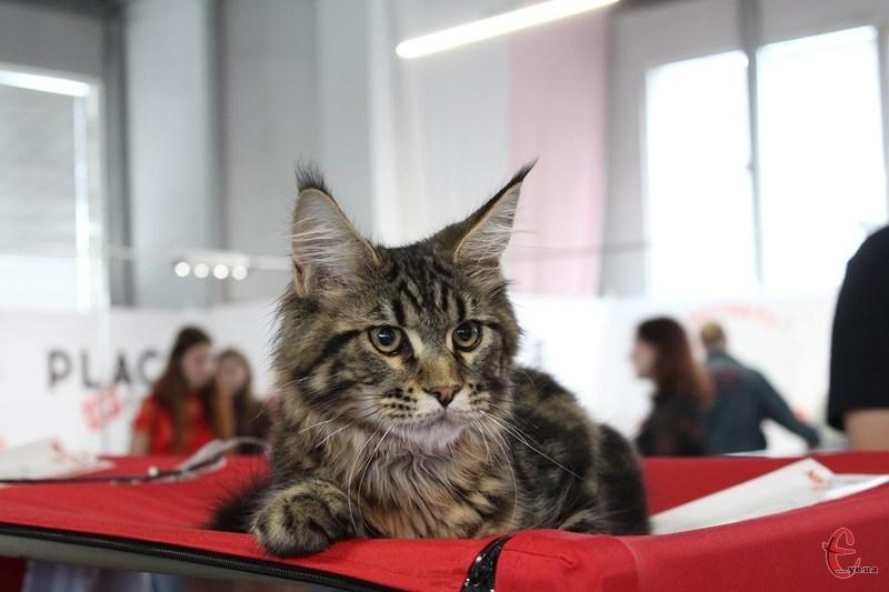 На котів та кішечок можна було подивитись упродовж 18-19 травня