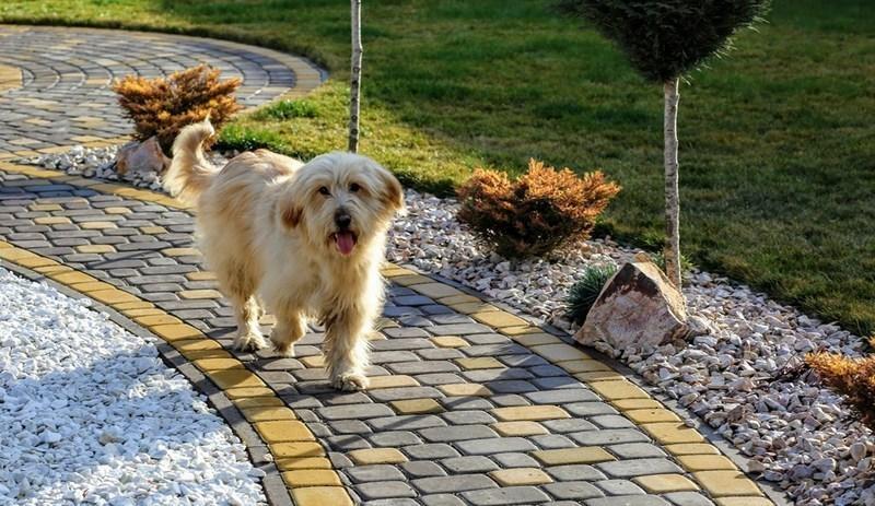 Обличчям кампанії свідомого поводження із твердими побутовими відходами стане собака Гуфі