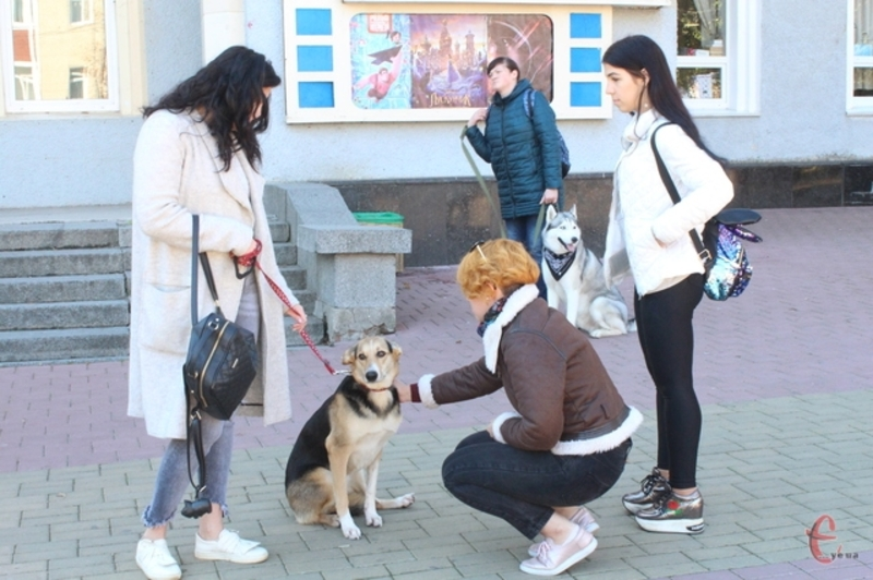 Марш за права тварин у Хмельницькому відбудеться уже вдруге