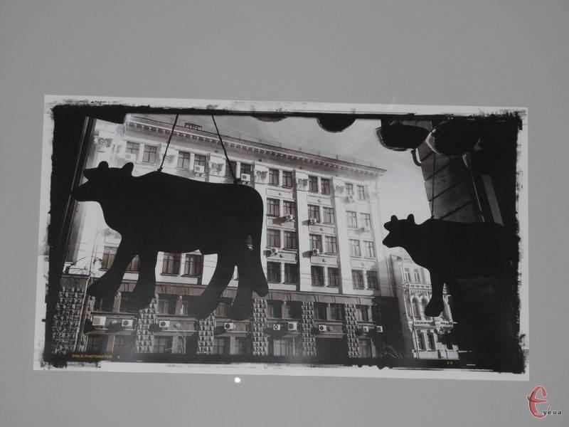 Знімки, презентовані на виставці, зроблені мобільним телефоном