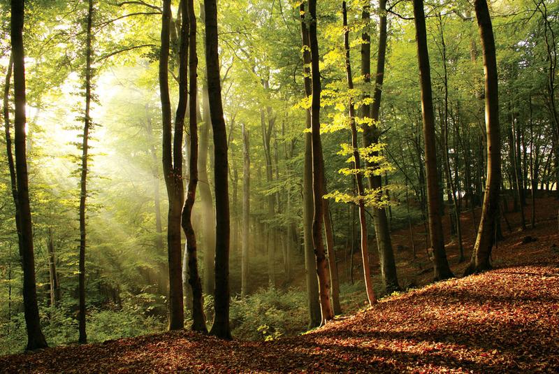 За 9 місяців цього року др бюджету надйшло більше 20 мільйонів гривень за користування лісовими ресурсами