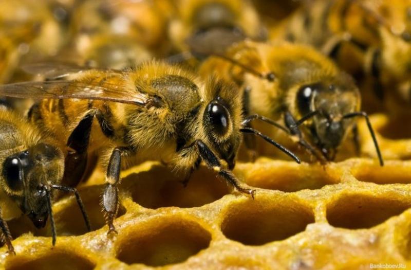 Бджолярі експортують за кордон мед, прополіс і квітковий пилок