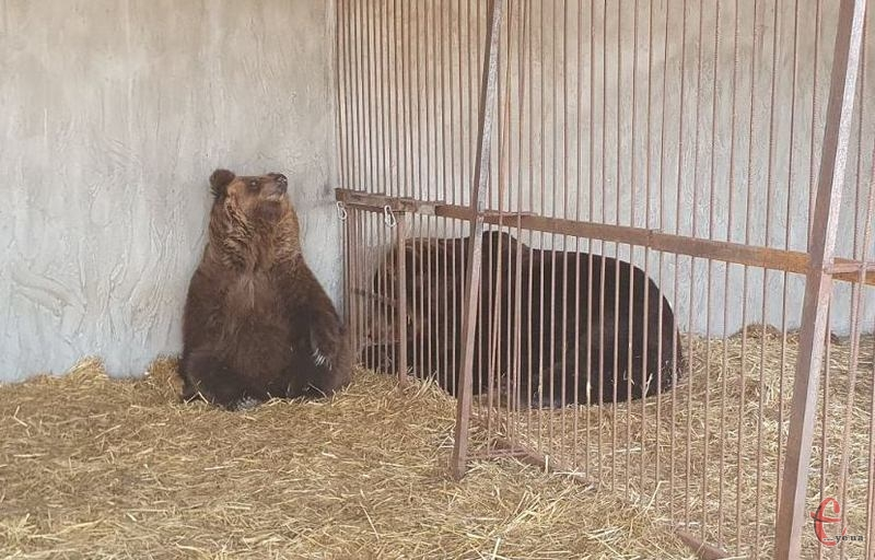 Наразі Аліса і Тімка мешкають у реабілітаційному центрі, що в Запорізькій області
