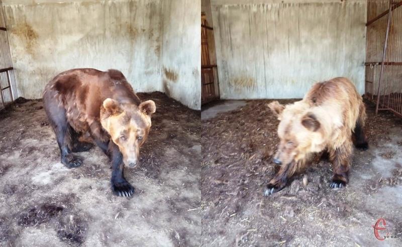 Наразі Аліса і Тімка мешкають у реабілітаційному центрі, що в Запорізькій області. Фото: надане Анною Масяч