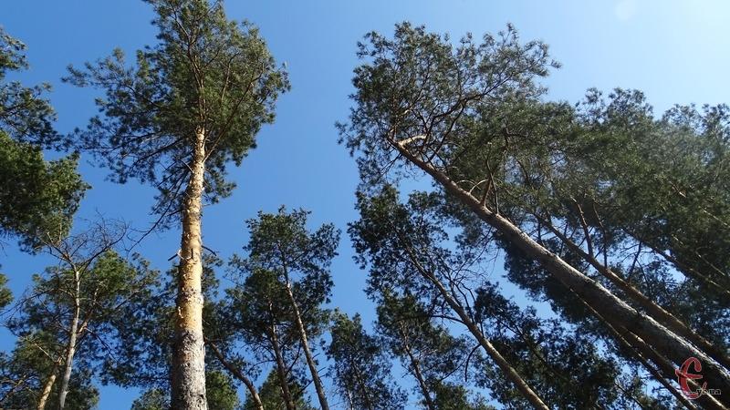 Лісники порушули правила пожежної безпеки в пожежонебезпечний період