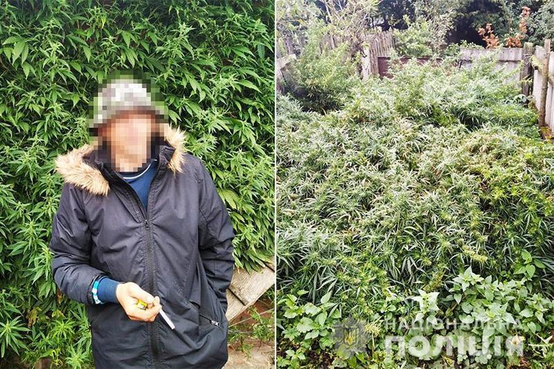 Насадженя конопель виявили у одразу у трьох жителів Хмельницької області