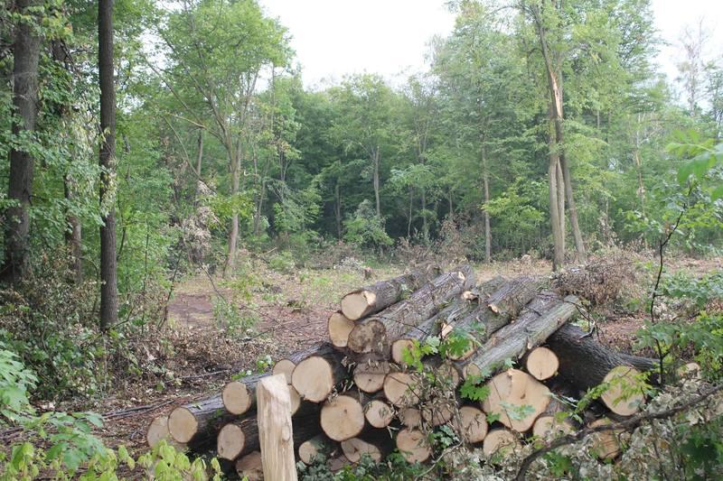 Вирубка лісів на Хмельниччині останнім часом одна із найважливіших тем