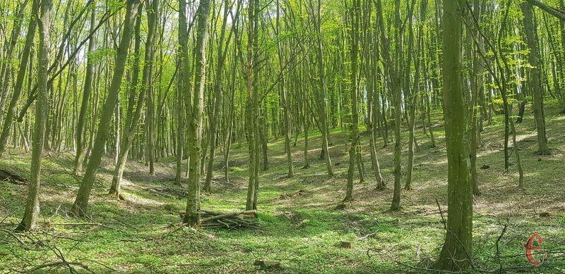 В області побільшає лісових насаджень