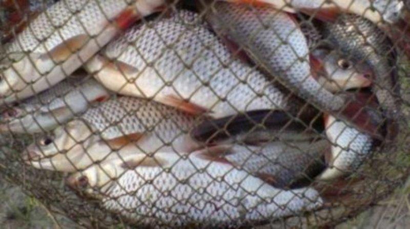 В Ізяславі засудили двох чоловіків, що для риболовлі використовували сітку