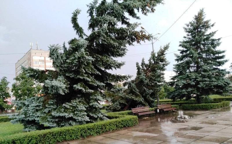 За останньою неповною інформацією у Нетішині стихією знищено понад 150 дерев