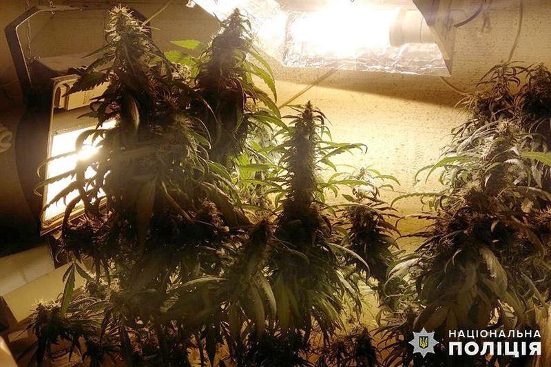 Правоохоронці шукали наркотичні пігулки, а знайшли коноплю