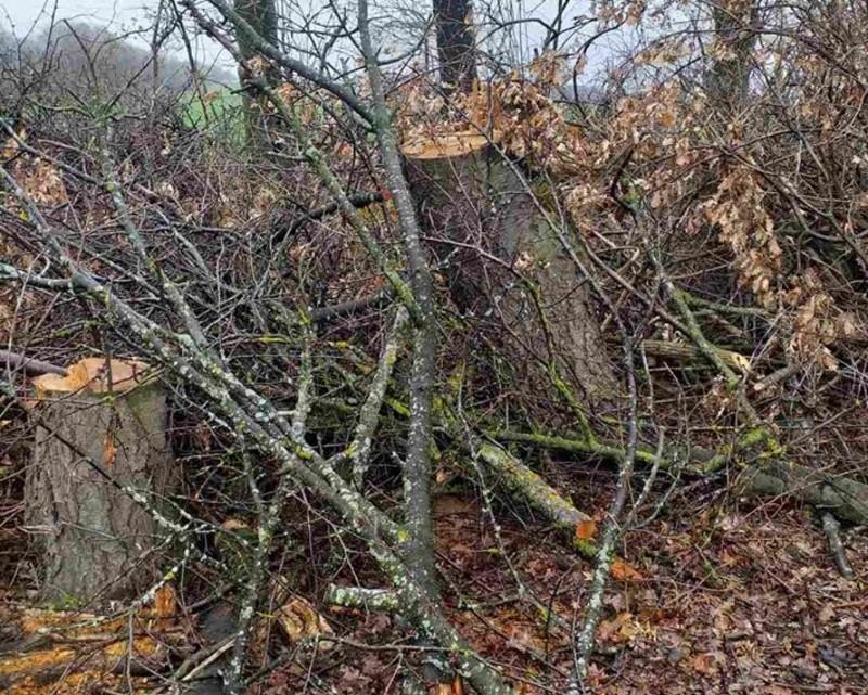 Дерева вируали у Чемеровецькому районі