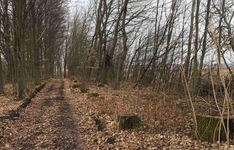 Правоохоронці розшукують осіб, які зрубали дерева