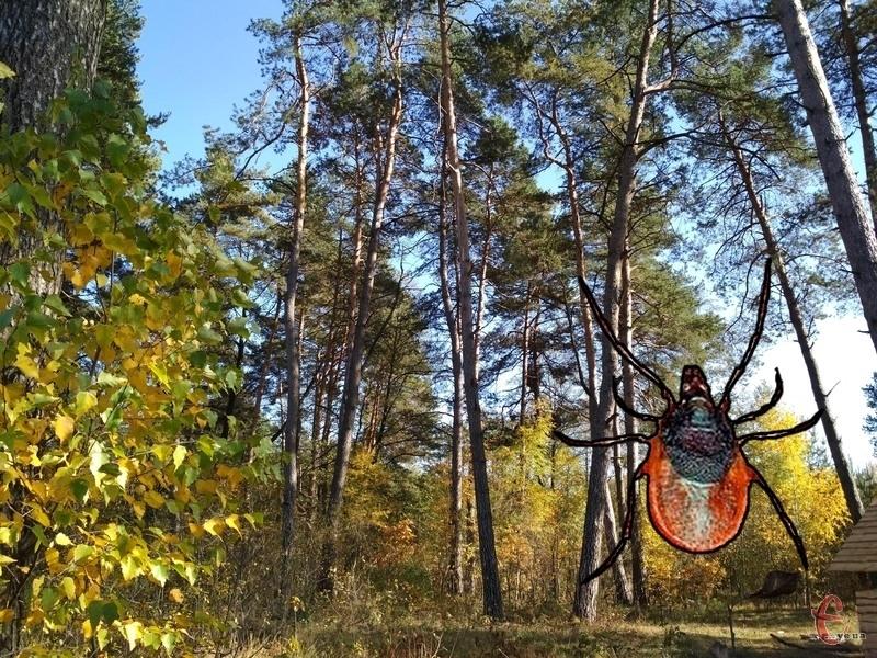 Найбільше випадків інфікування хворобою Лайма було зареєстровано у Кам'янець-Подільському районі