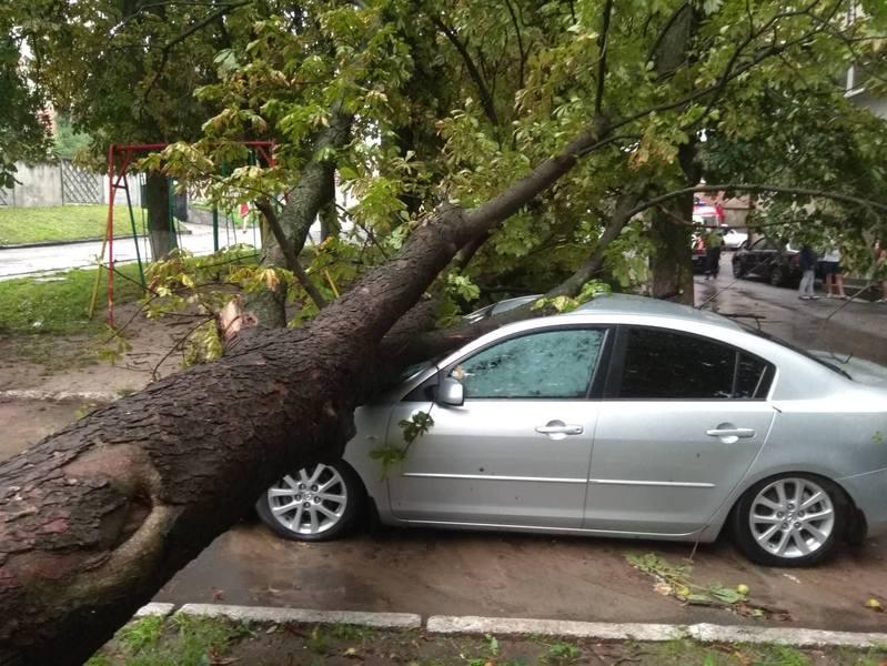 Внаслідок беревію, у Хмельницькому на автомобіль впало дерево