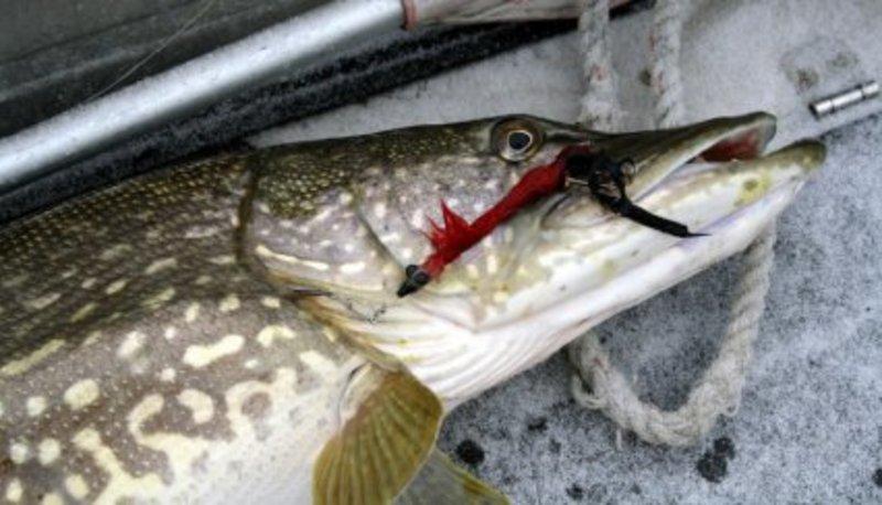 Рибалка заплатить штраф у розмірі 43 тисяч 571 гривні