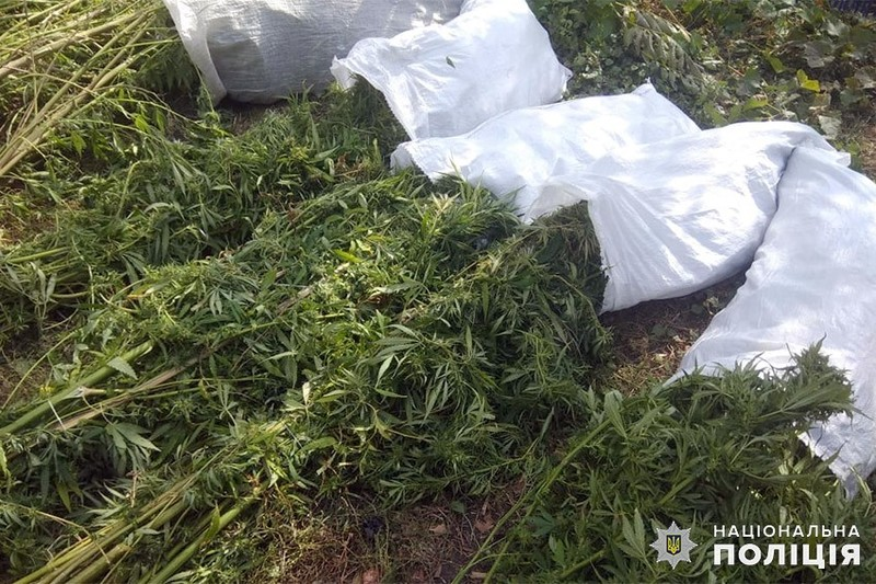 Під час обшуку у чоловіка працівники поліції виявили на присадибній ділянці 76 кущів конопель