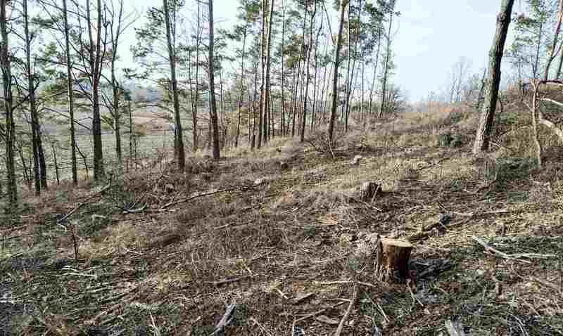 Незаконну вирубку дерев було зафіксовано між селами Ставок та Вязовець
