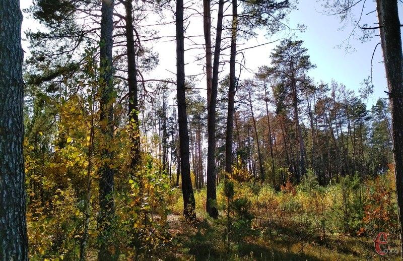 Потерпілий збирав гриби у Славутському районі