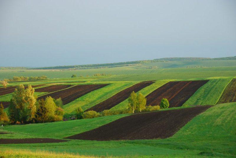 У Хмельницькій області учасники АТО (ООС) отримали у власність 9 366 земельних ділянок
