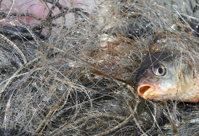 На Хмельниччині продовжують ловити рибу забороненими знаряддями
