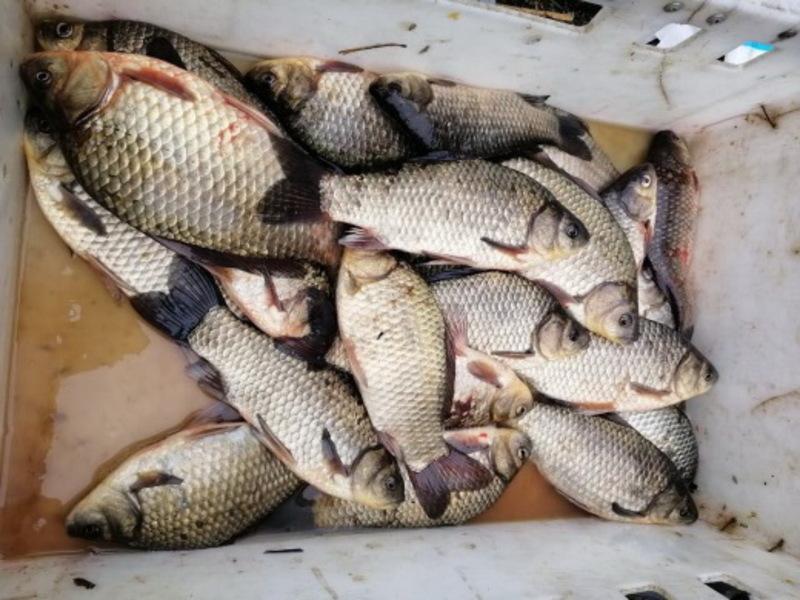 Нагадаємо, на Хмельниччині до 30 червня триває нерест, через що рибалити можна не всюди