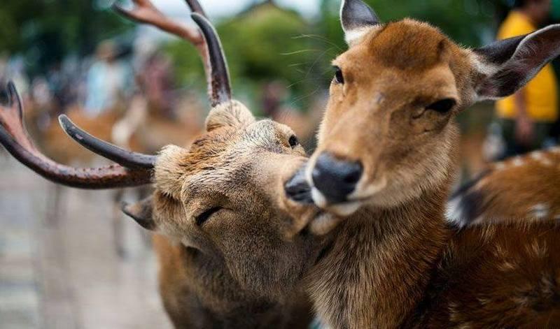 Екологи радять не шуміти у лісі